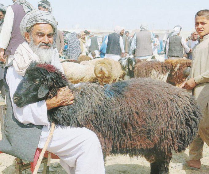Afghanistan-capre
