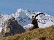 Coesione - Piemonte -. cambiamento - clima